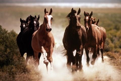 Cavalos de raça - origem