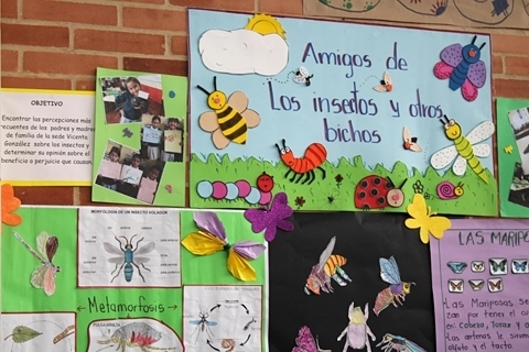 Amigos de los insectos y otros bichos