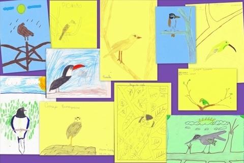 Cerrado: na anatomia dos pássaros uma inspiração para o avanço da tecnologia